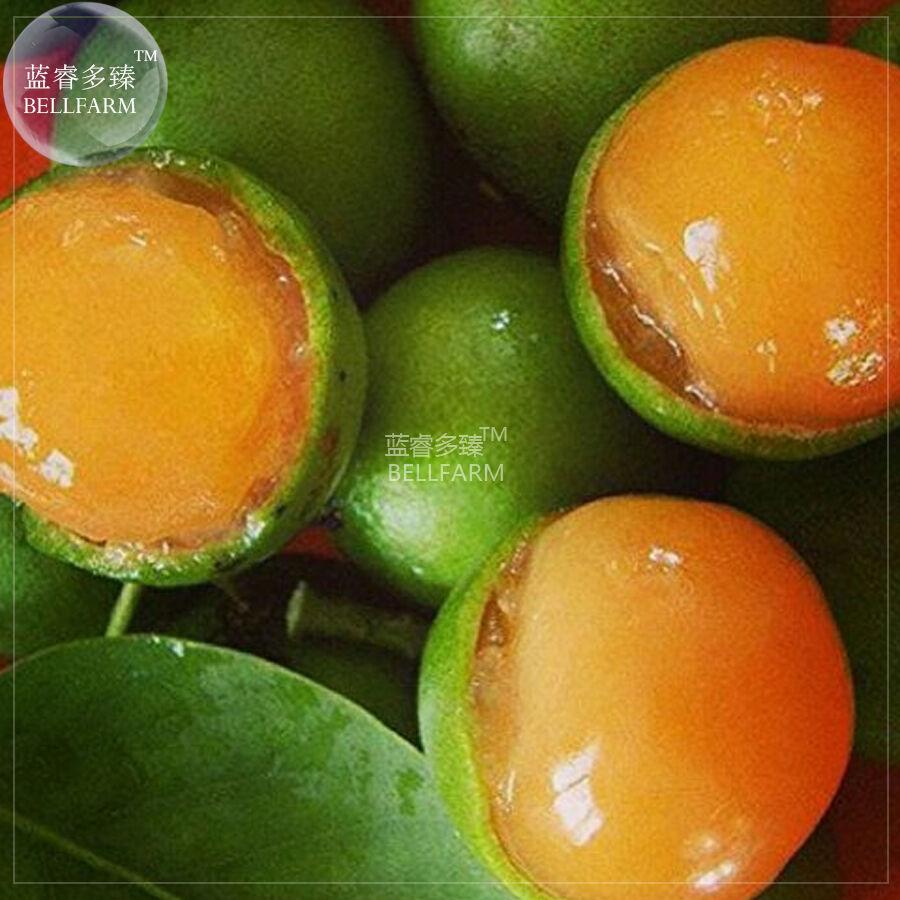 BEST PRICE Lemon Sweet Spanish Lime Tree 10 seeds, FS DIY Home Garden Trees