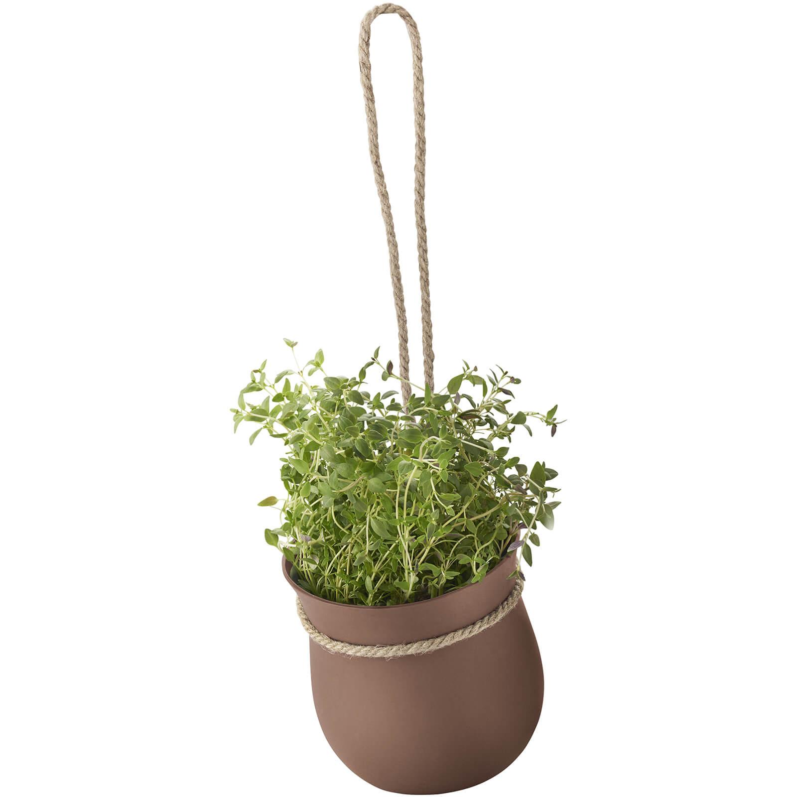RIG-TIG Grow-It Herb Pot - Terracotta