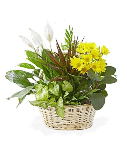Blooms Today Dish Garden with Fresh Cut Flowers Flower Delivery