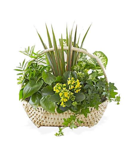 Blooms Today European Dish Garden Flower Delivery