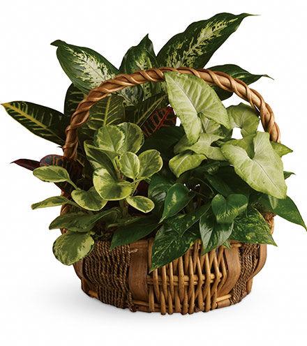Blooms Today Emerald Garden Basket Flower Delivery