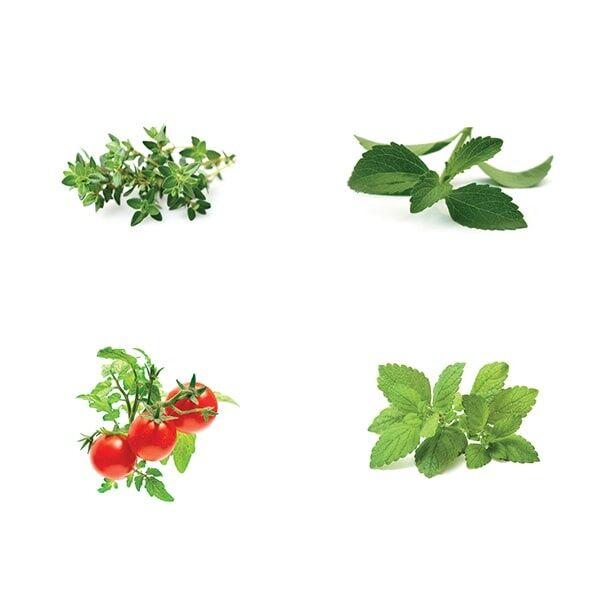 ApolloBox Smart Herb Garden Refill