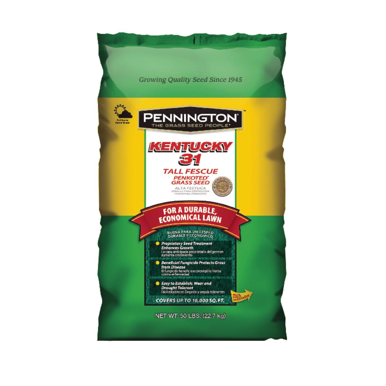 Pennington Seed Kentucky 31 Tall Fescue Full Sun/Medium Shade Grass Seed 50 lb.