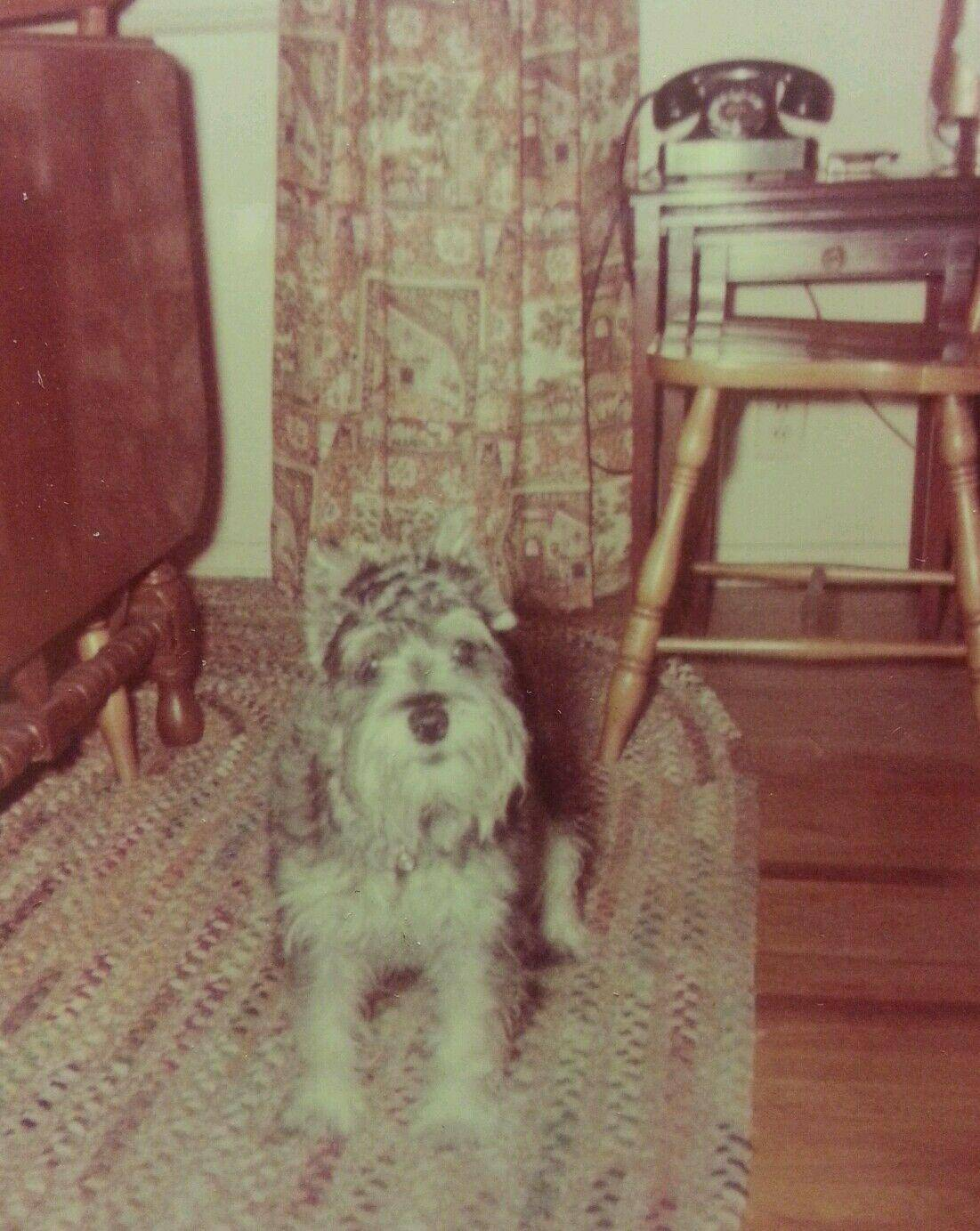 VINTAGE MID CENTURY MOD SCHNAUZERS POOCH BFF CUTE DOG CALL ME ON THE PHONE PHOTO   [ ]