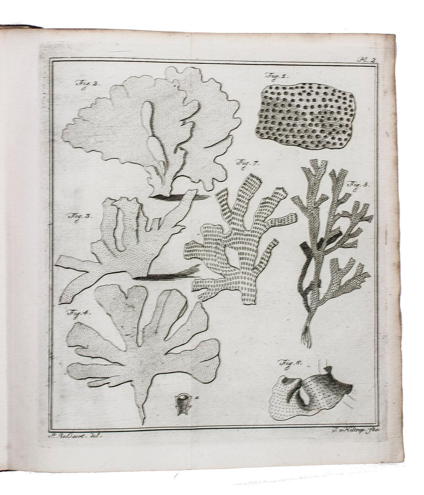 Lyst der plant-dieren, bevattende de algemeene schetzen der geslachten en korte beschryvingen der bekende zoorten. . Vertaald, en met aanmerkingen en