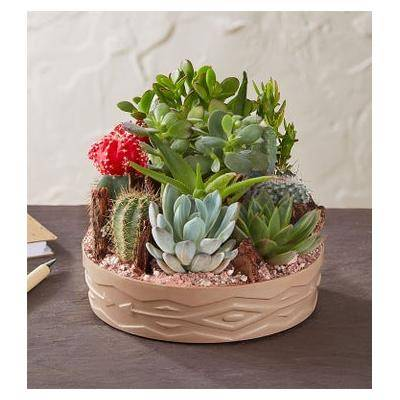 1-800-Flowers Cactus Dish Garden Large by 1-800 Flowers