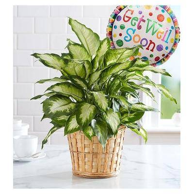 1-800-Flowers Get Well Green Plant With Balloon by 1-800 Flowers