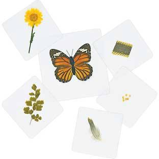Discount School Supply Excellerations Laminated Specimen Set 28 Pieces by Discount School Supply