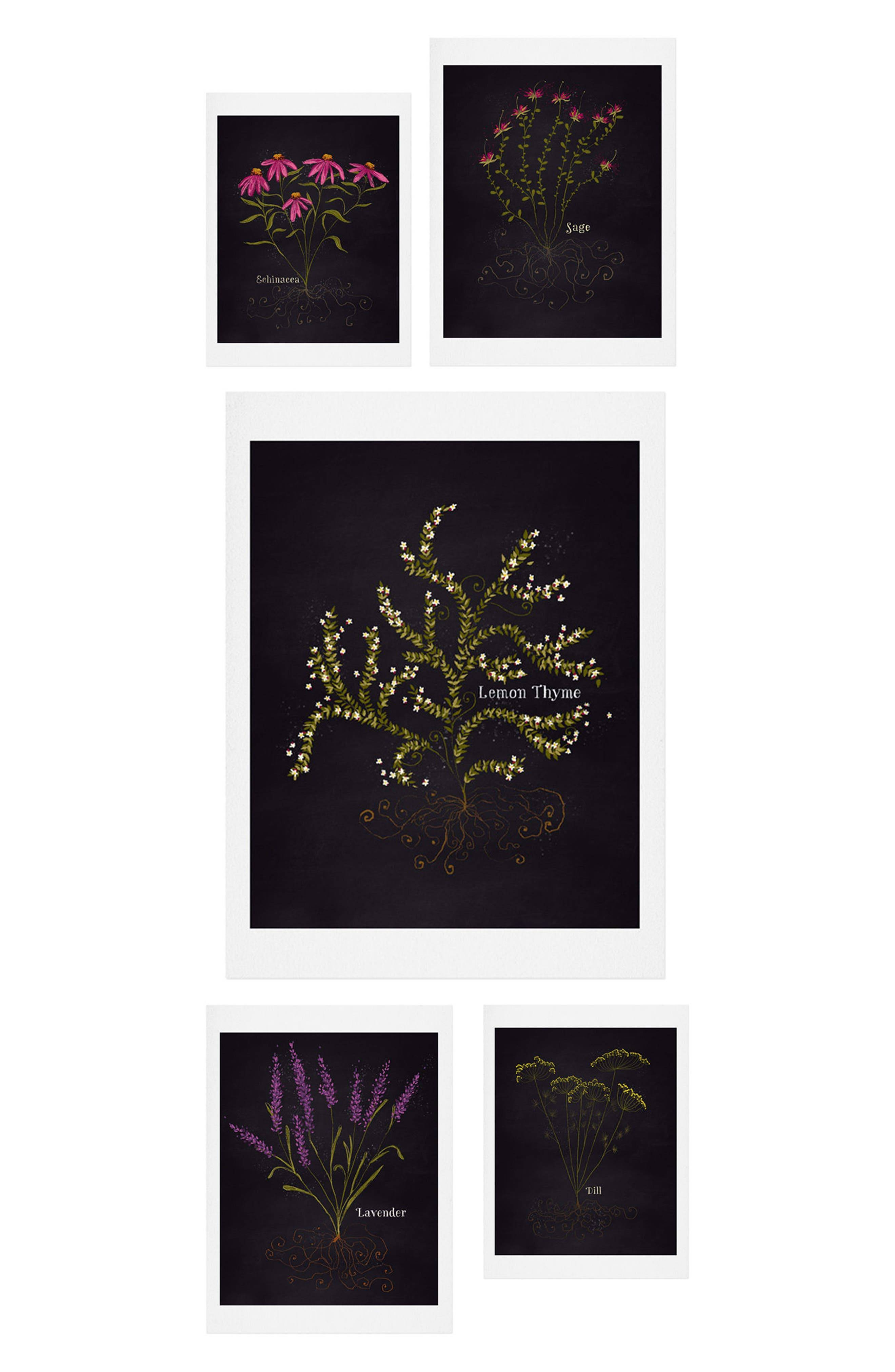 Deny Designs Herb Garden 5-Piece Gallery Wall Art Print Set, Size One Size - Black