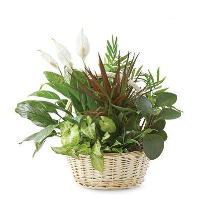 From You Flowers Plants - Dish Garden - Same Day Delivery - Regular