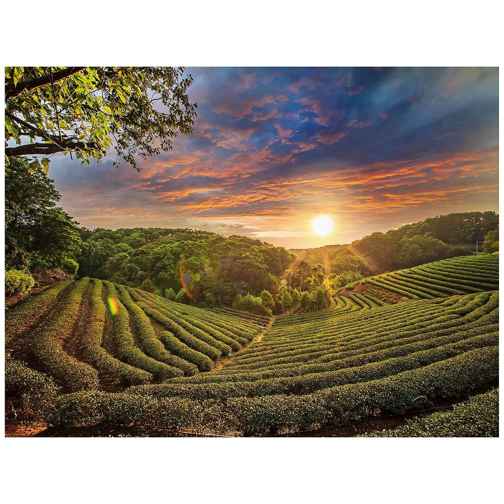 "West of the Wind Tea Plantation 40""W All-Season Outdoor Canvas Wall Art - Style # 11F75"