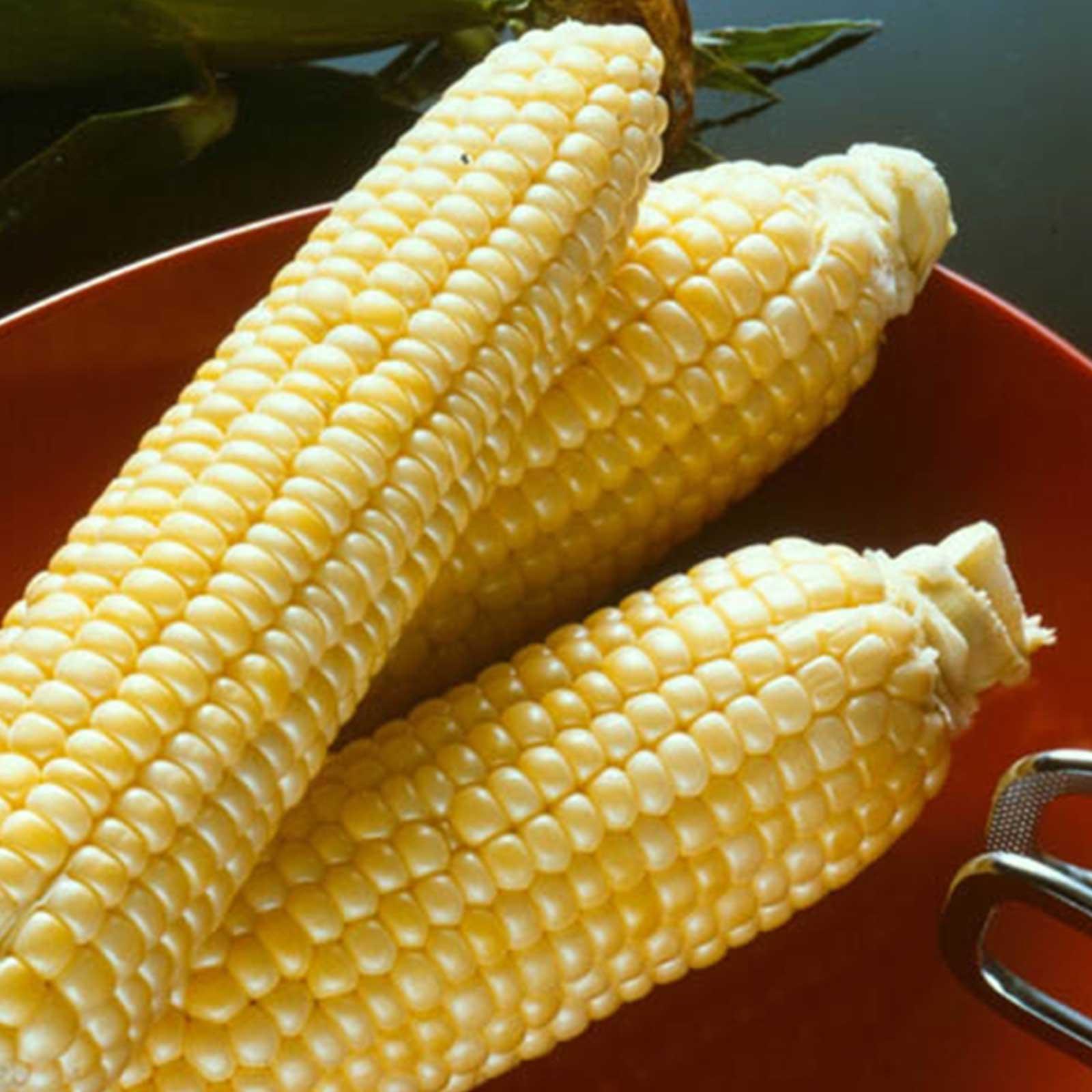 Mountain Valley Seed Company Seeds: Sugar Buns Hybrid Corn Garden (Treated) - 25 Lb- Vegetable Corn