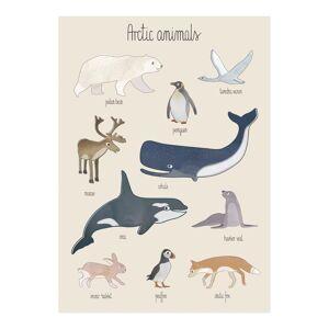 Solhem Poster arctic animals 50 x 70 cm, sebra
