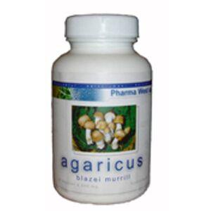 Agaricus Blazai Murill 1 Pk.