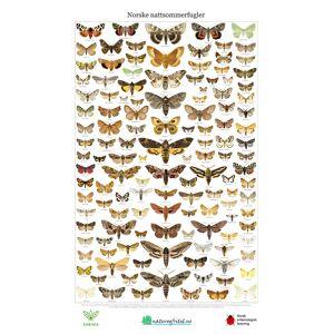 Liljebergs Norske nattsommerfugler Plakat 46x69,5cm