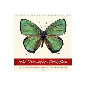 ART The Beauty of Butterflies (Wall Calendar 2020 300 × 300 mm Square) (1325468460)