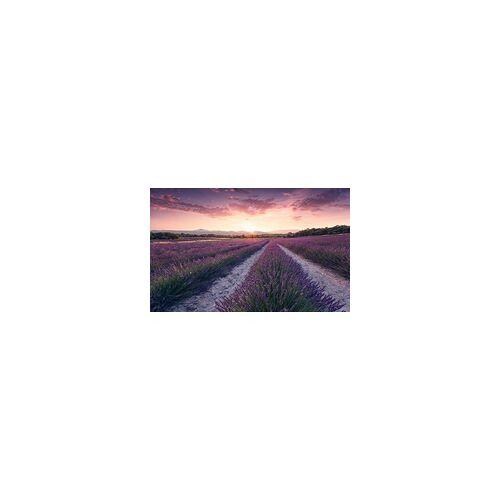 Komar Vlies Fototapete Lavender Dream 450 x 280 cm