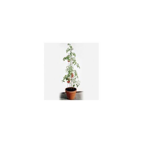 Bellissa Tomatenturm 120 cm hoch