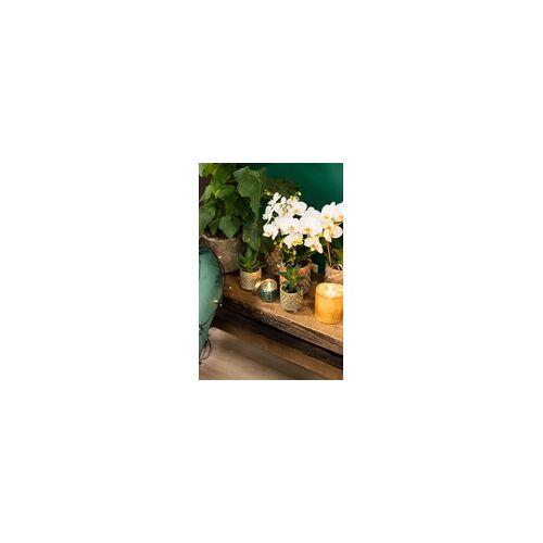 Pflanzenset Orchidee und Sukkulenten 'Binti Grey' bestehend aus: 1x Orchidee im 9 cm Topf und 2x Sukkulenten im 9 cm Topf