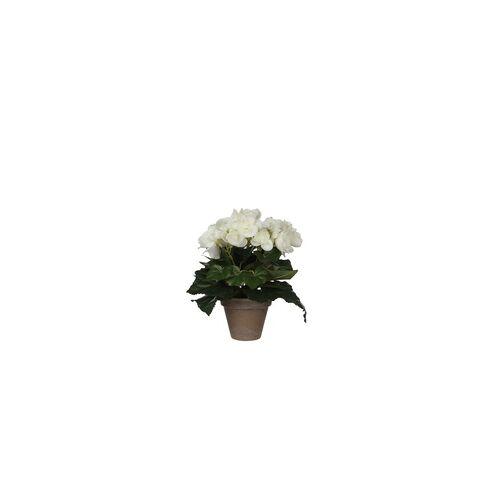 Mica decorations Mica Begonia in Topf weiß, 25 x 20 cm