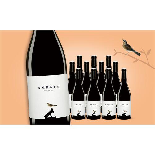 Ambata Mencia 2019 Weinpaket  aus Spanien