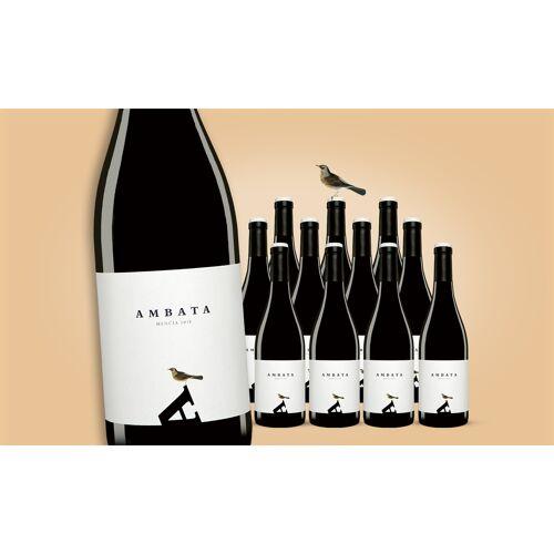 Ambata Mencía 2019 Weinpaket  aus Spanien