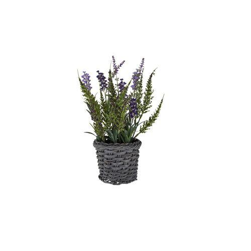 Höffner Lavendel im Korb ¦ lila/violett ¦ Kunststoff, Rattan