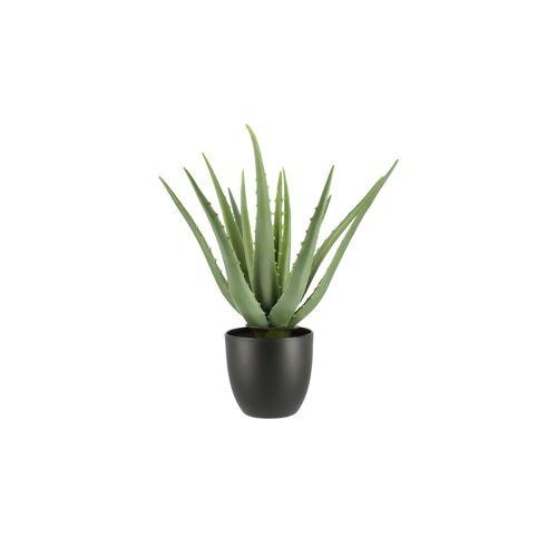 Höffner Aloe im Topf ¦ grün ¦ Kunststoff Ø: 25