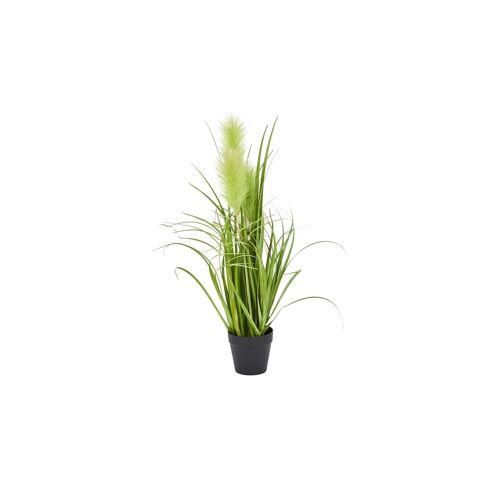 Höffner Pampasgras ¦ grün ¦ Kunststoff ¦ Maße (cm): H: 55