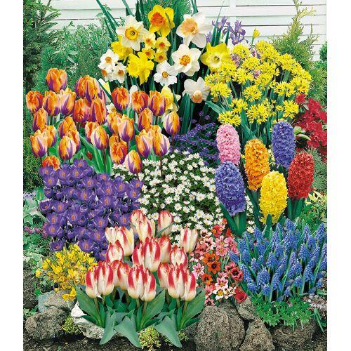 140 Blumenzwiebeln Spar-Paket