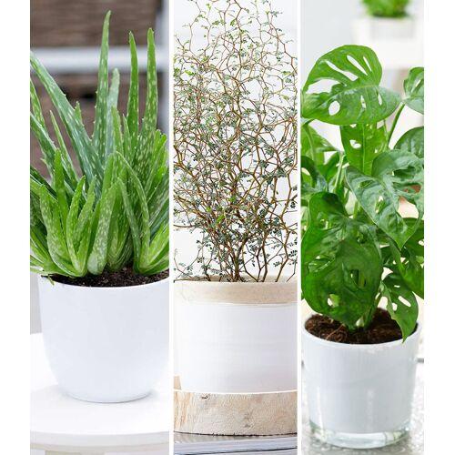 Zimmerpflanzen-Mix 'Pflegeleicht'