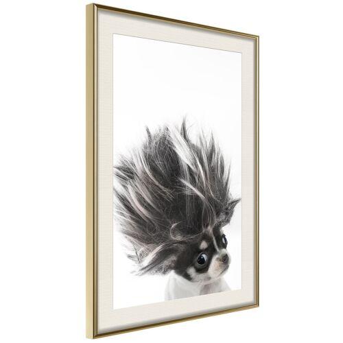 Artgeist Poster - Funny Chihuahua