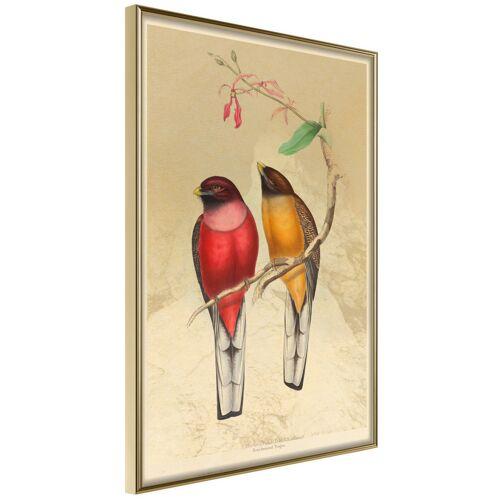 Artgeist Poster - Ornithologist's Drawings