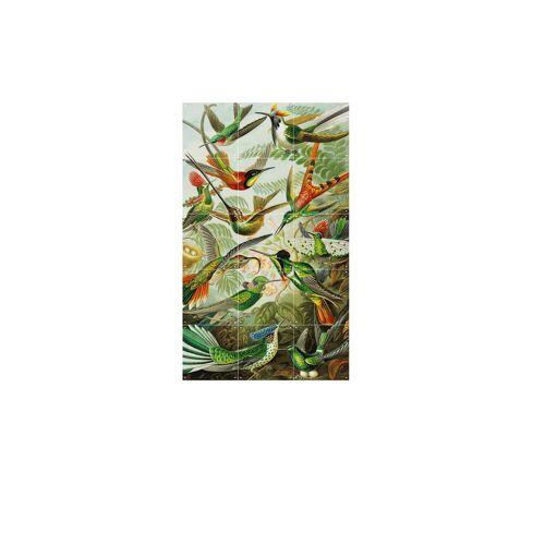 IXXI - Kolibris (Haeckel), 60 x 100 cm
