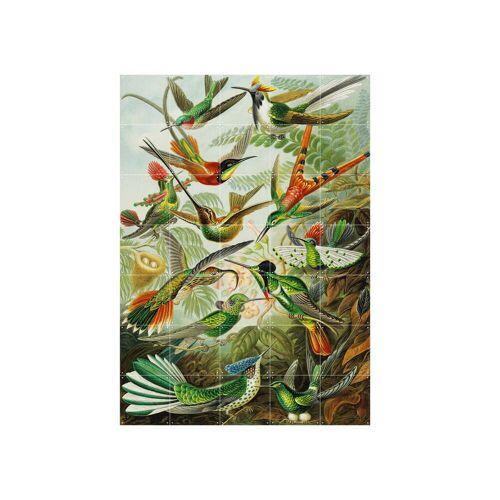 IXXI - Kolibris (Haeckel), 100 x 140 cm