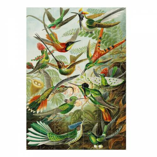 IXXI - Kolibris (Haeckel), 140 x 200 cm