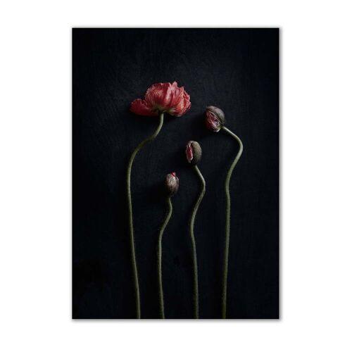 Paper Collective - Stillleben 02 (Red Poppies), 50 x 70 cm