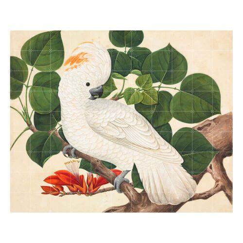IXXI - Kakadu (Reeves), 220 x 180 cm