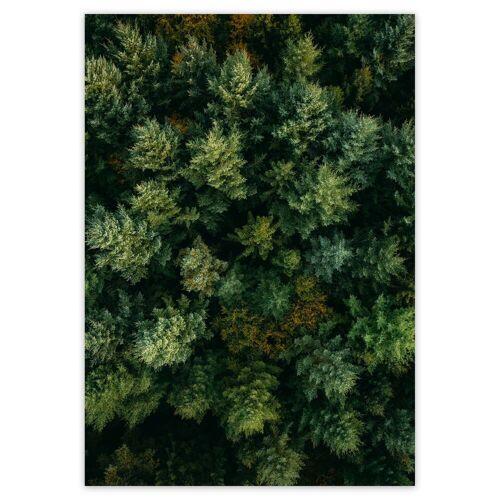 artvoll - Forest Poster, 50 x 70 cm
