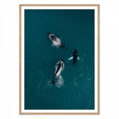 artvoll - Whales Poster mit Rahmen, Eiche natur, 50 x 70 cm