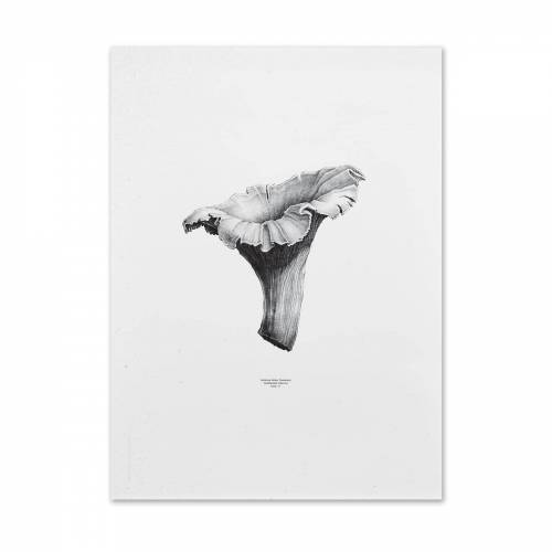 Paper Collective - 1:1 Chanterelle Poster (weiß), 50 x 70 cm