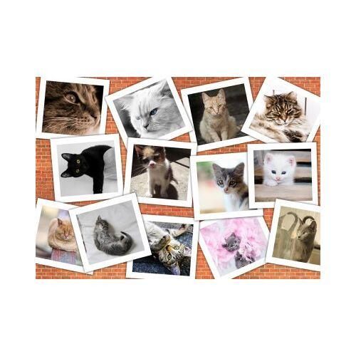 Grafika Katzen 1000 Teile Puzzle Grafika-T-00381