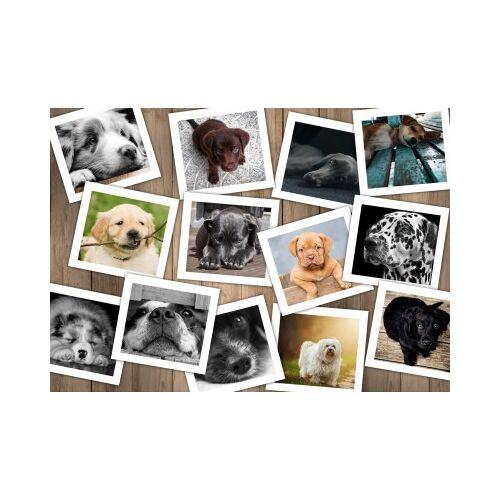 Grafika Hunde 1000 Teile Puzzle Grafika-T-00380