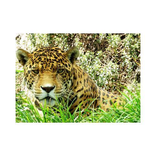 Grafika Kids Jaguar 24 Teile Puzzle Grafika-Kids-00537