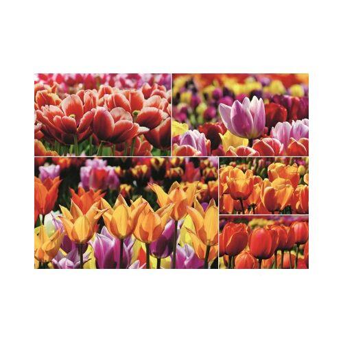 Jumbo Holländische Tulpen 1000 Teile Puzzle Jumbo-18364