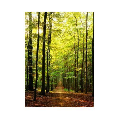 Eurographics Im Wald 1000 Teile Puzzle Eurographics-6000-3846
