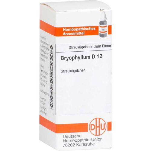 DHU Bryophyllum D 12 Globuli