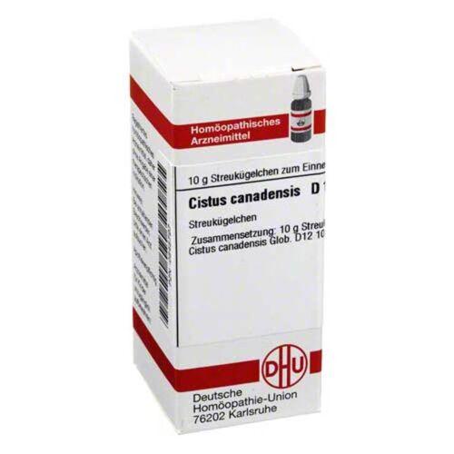 DHU Cistus canadensis D 12 Globuli