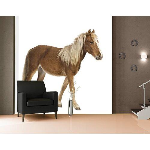 Bilderwelten DE Selbstklebende Tapete - Fototapete Pony