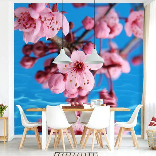 Bilderwelten DE Tapete selbstklebend - Kirschblüte - Fototapete Quadrat